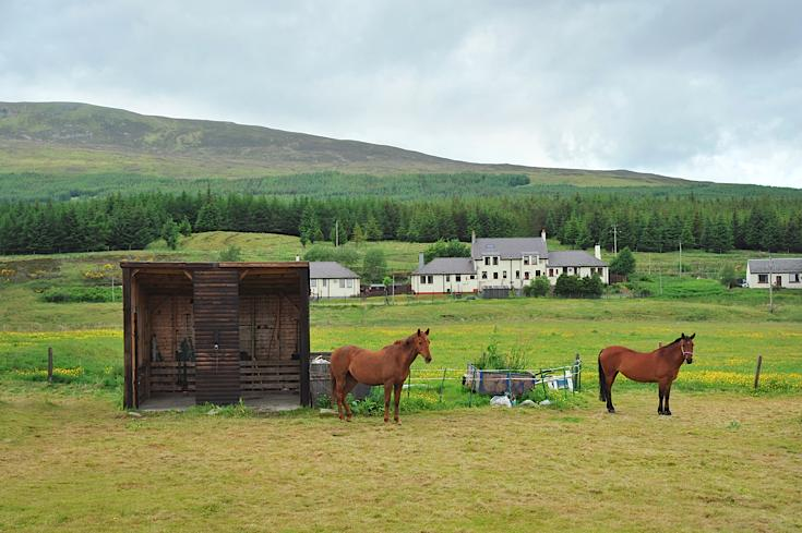 Beautiful horses at Dalwhinnie