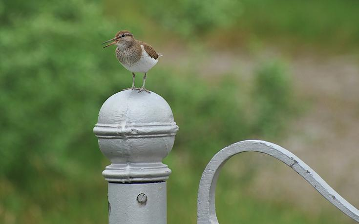 Bird on gate post