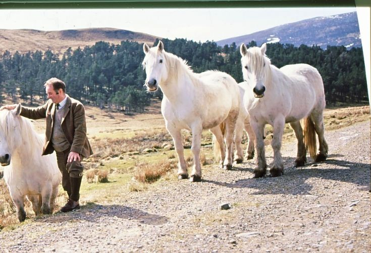 Geordie Oswald with the BenAlder ponies