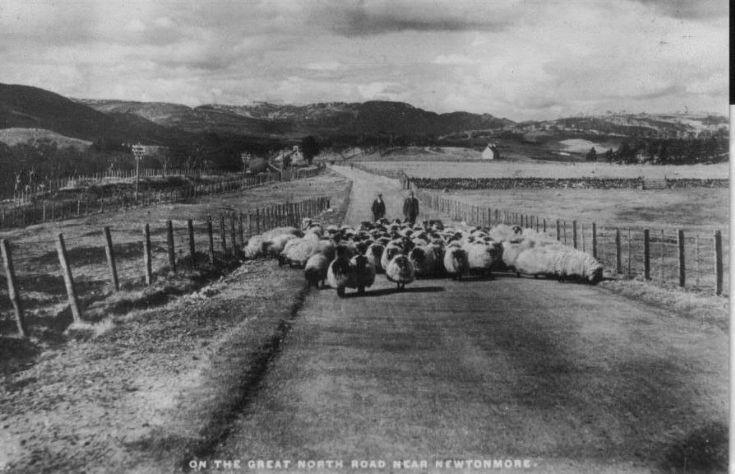 Postcard showing Mr Finlayson, shepherd at Etteridge